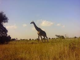 El viaje que no deberías perderte porque África es diferente.